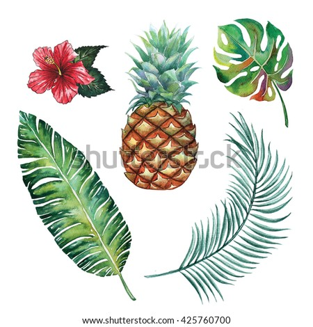 Tropical botany and blossom ,silk palm ,split leaf hibiscus flower beautiful watercolor  botany spring summer Hawaii beach , design object print ,object isolated - stock photo