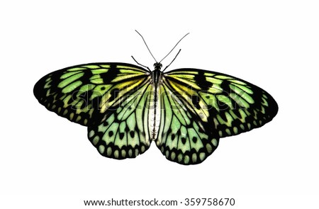 Tropical Butterfly Aurora in transmitted light, concept