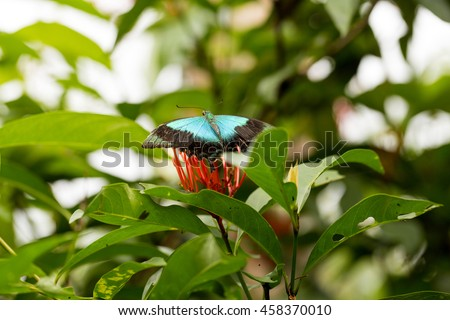 Tropical butterfly on a flower, Indonesia