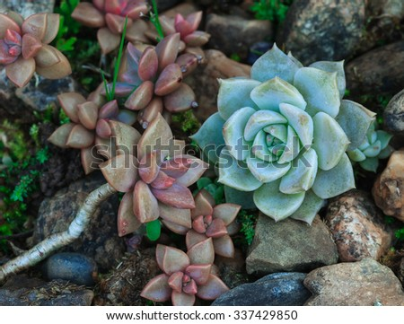 Tropical cactus - stock photo