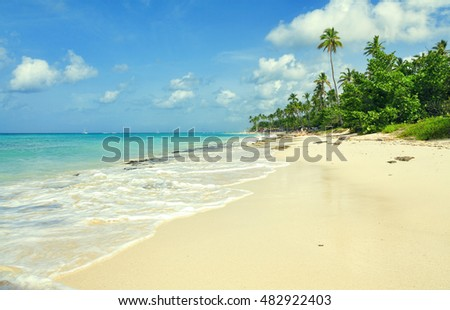Tropical coast of the Dominican Republic.