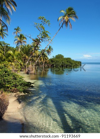 Tropical coast with the shade of a coconut tree in the water, Caribbean, Panama - stock photo