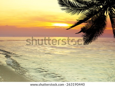 Tropical coconut trees at sunset over the sea - stock photo