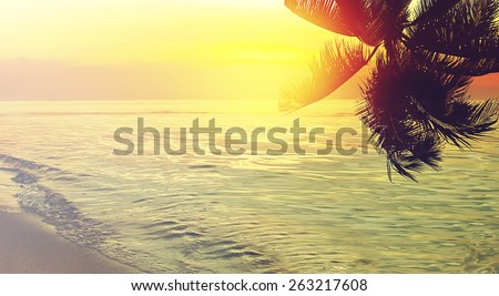 Tropical coconut trees at sunsrise. Panoramic beach background. Vintage effect. - stock photo