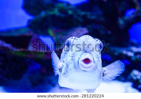 tropical colorful sea fish - stock photo