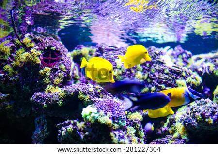 tropical colorful sea fish - stock photo