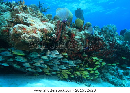 Tropical coral reef and fish in the coastal waters of the caribbean sea