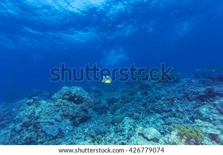 Tropical coral reef and fishes, marine life. - stock photo