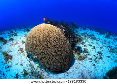 Tropical coral reef in the caribbean sea  - stock photo