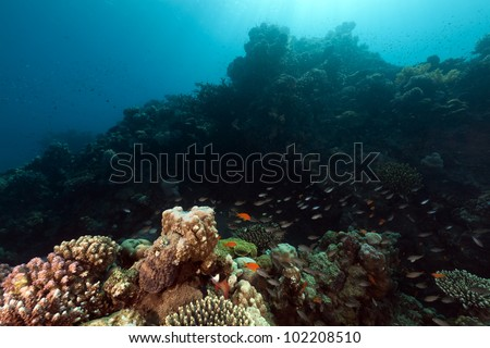 Tropical coral reef in the Red Sea - stock photo