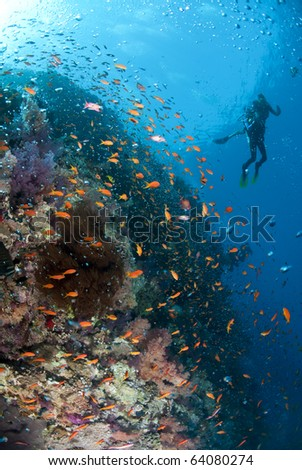 Tropical coral reef scene with bubbles and two scuba divers in the background. Shark reef, Ras Mohamed national Park, Red Sea, Egypt.