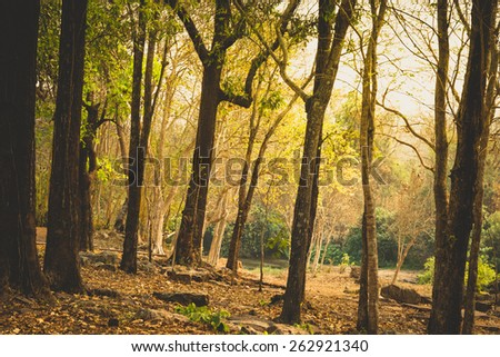 Tropical deciduous forest in summer - stock photo
