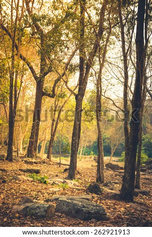Tropical deciduous forest in summer