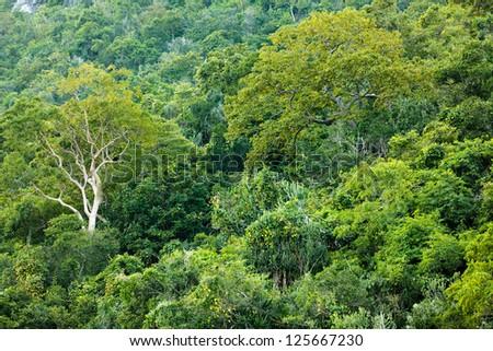 Tropical dense forest on shore, Sam Roi Yot, Thailand - stock photo