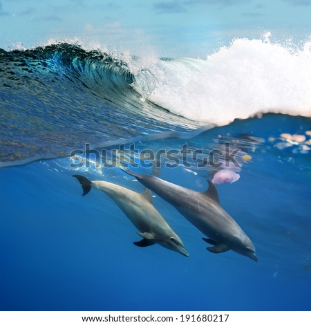 tropical diving a pair of dolphins playing under ocean breaking surfing wave