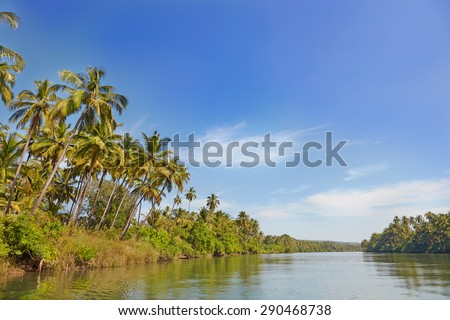 Tropical evening landscape with palm tree. GOA, Chapora River