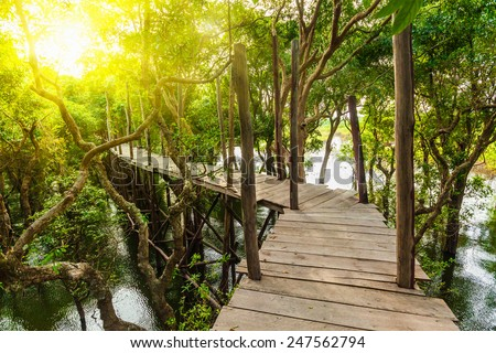 Tropical exotic travel concept - wooden bridge in flooded rain forest jungle of mangrove trees near Kampong Phluk village, Cambodia - stock photo