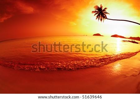 Tropical fantasy - stock photo