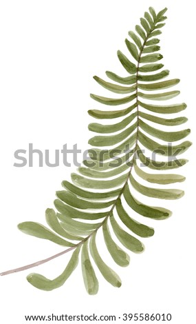 tropical fern frond tree  leaf plant botanic watercolor painting on white background - stock photo