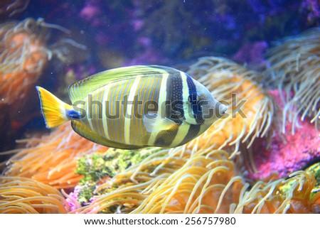 Tropical Fish - stock photo