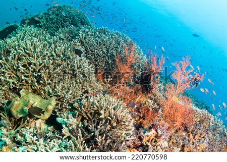 Tropical fish and colorful corals on a healthy, thriving coral reef - stock photo