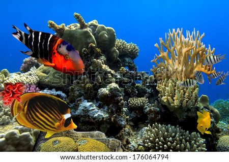 Tropical Fish and Coral Reef. - stock photo