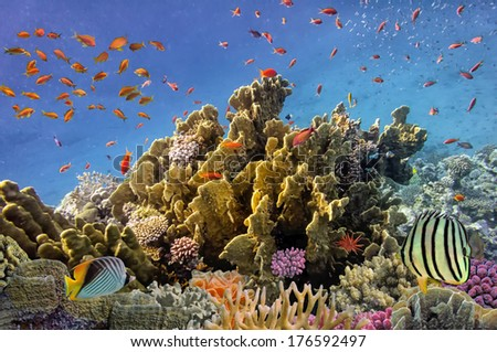 Tropical Fish and Coral Reef, Red Sea, Egypt