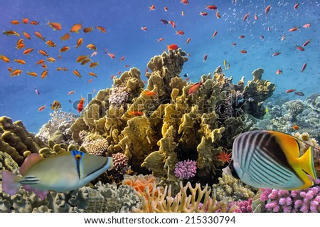 Tropical Fish and Coral Reef, Red Sea, Egypt - stock photo