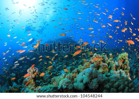 Tropical Fish and Coral Reef with Scuba Divers in background