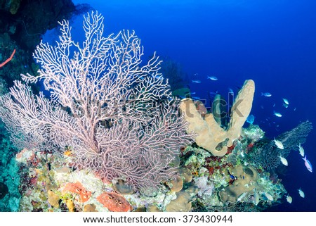 Tropical fish and corals on a deep reef - stock photo