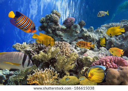Tropical fish and Hard corals in the Red Sea, Egypt - stock photo