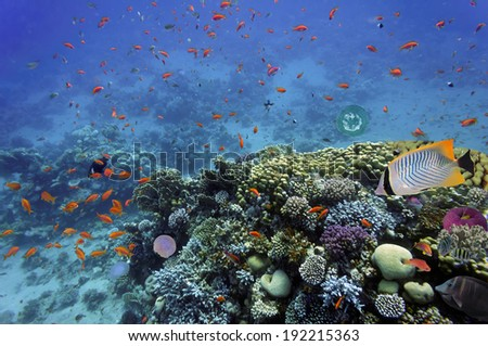 Tropical fish and Hard corals in the Red Sea, Egypt.