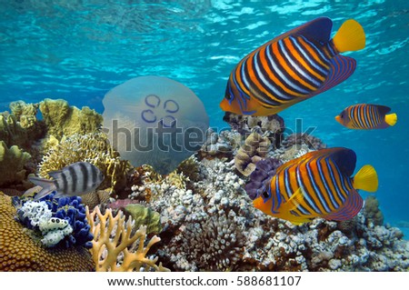 Tropical fish and Hard corals in the Red Sea. Egypt