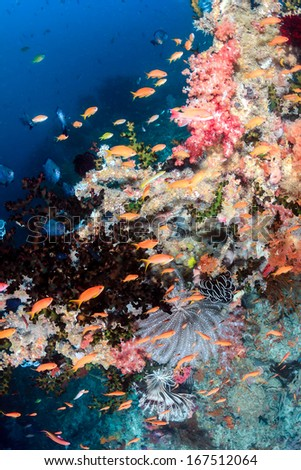 Tropical fish and soft corals on a coral reef - stock photo