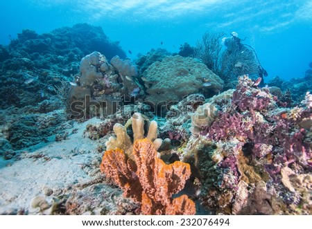 Tropical fish, corals and sponges around a thriving tropical coral reef of Palawan.