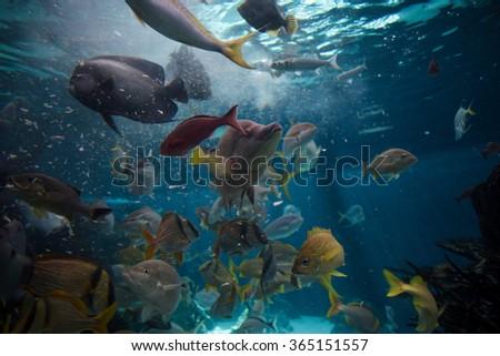 Feeding frenzy stock photos royalty free images vectors for Feeding frenzy fish