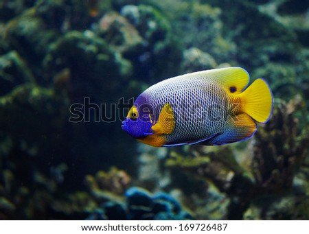 Tropical fish in ZOO of Budapest
