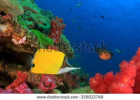 Tropical fish: Longnose Butterflyfish on coral reef - stock photo