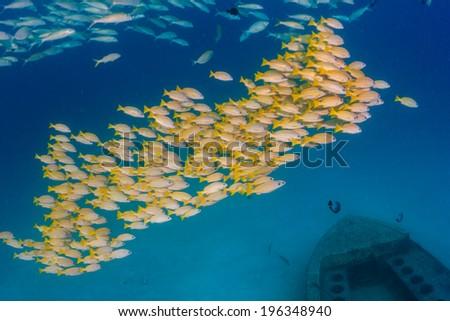 Tropical fish near a small shipwreck - stock photo