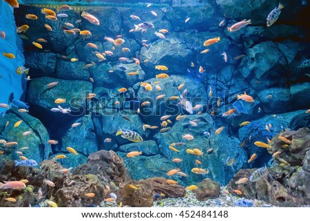 Tropical fish on a coral reef ia an aquarium