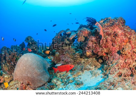 Tropical fish on a deep, healthy coral reef - stock photo