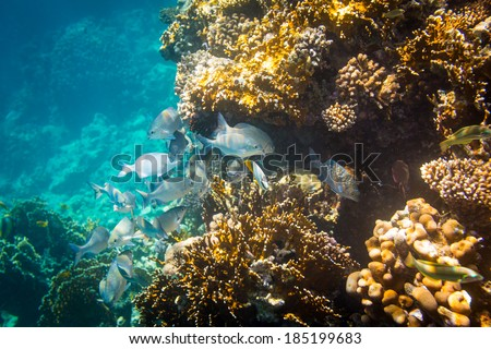 Tropical fish on background of a coral reef