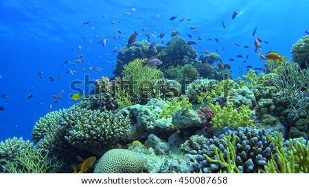 Tropical Fish on Vibrant Coral Reef, underwater scene - stock photo