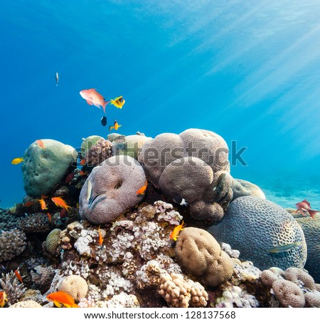 Tropical fish swimming around a hard coral pinnacle - stock photo