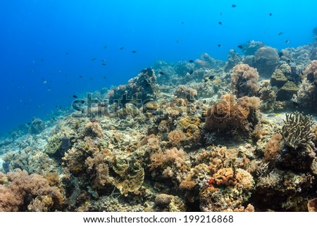 Tropical fish swimming around a healthy coral reef - stock photo