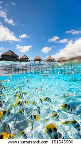 Tropical fish swimming under over the water bungalows in  French Polynesia - stock photo