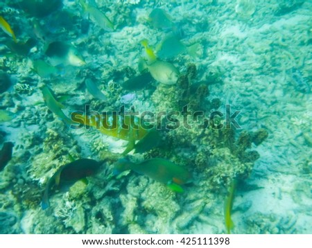 tropical fish under water - stock photo