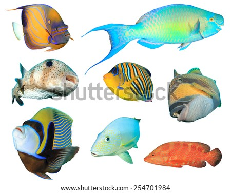 Tropical fishes isolated on white background - stock photo