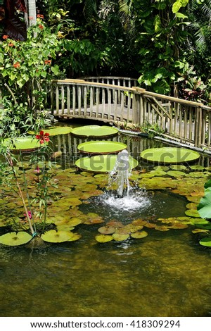Tropical floating water lily garden with wooden bridge. - stock photo