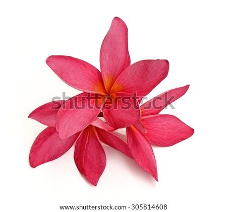 Tropical flowers frangipani (plumeria) isolated on white background - stock photo